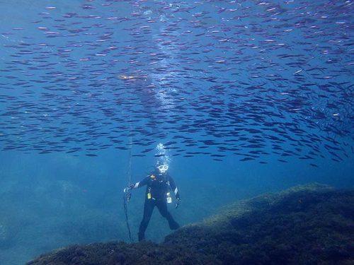 魚の群れにも囲まれて