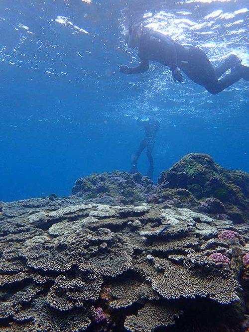 サンゴの上の魚も見つつ