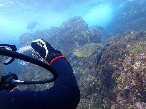 集まるウミガメ撮ってみて