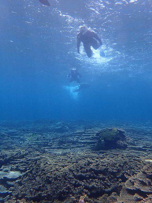 サンゴの上に集まる魚なんかも見ながら沖でて