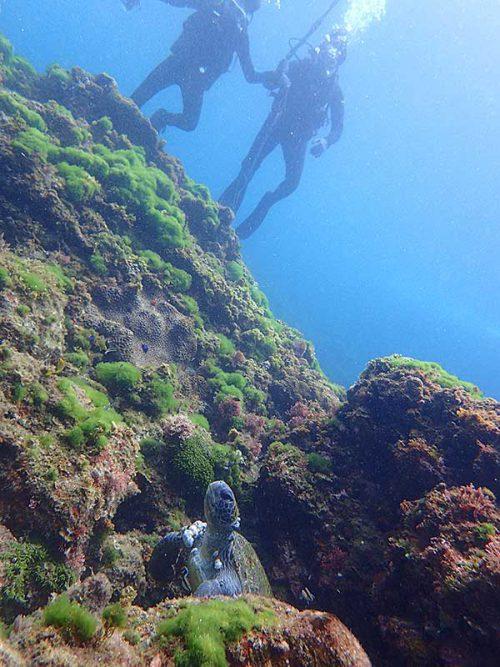 岩の隙間にアオウミガメ