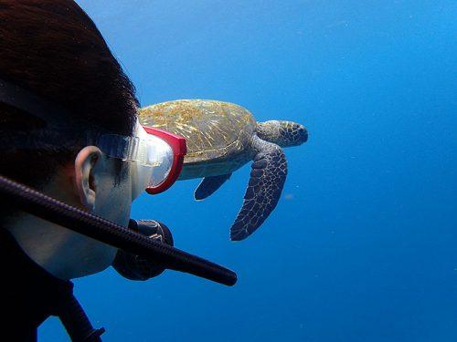 ウミガメと一緒に泳いで周り