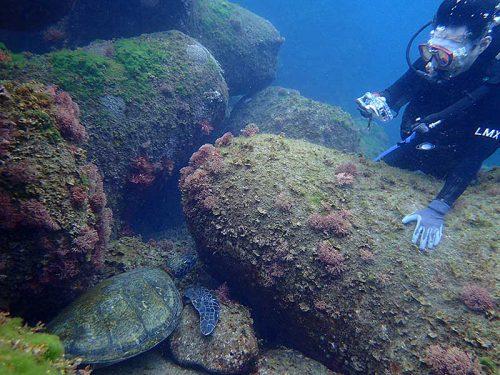 隙間で休むウミガメ見たり