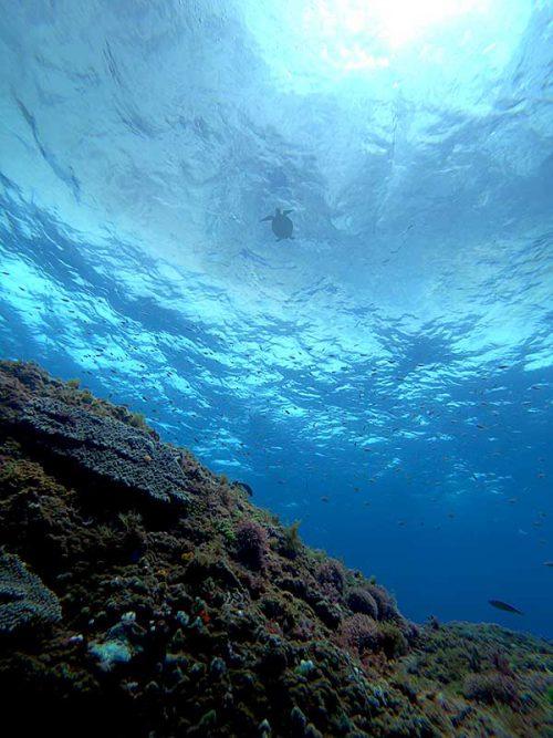 上にはウミガメ泳いでて
