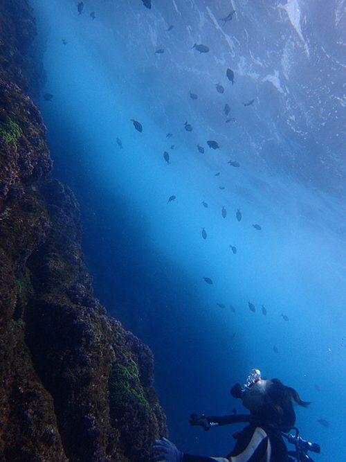 上の方には魚の影もありまして