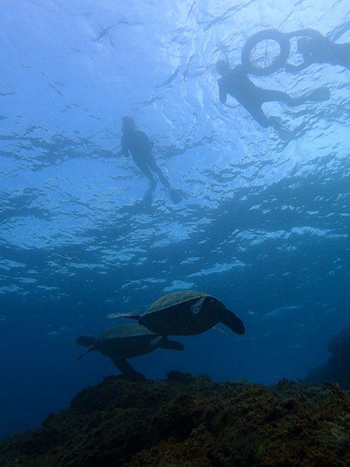 ちょっと沖にはウミガメたくさん