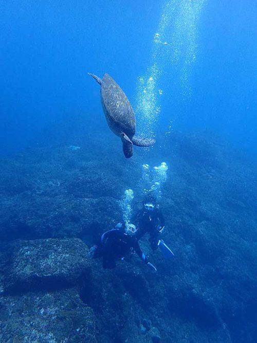 潜ってきてたウミガメ見たり