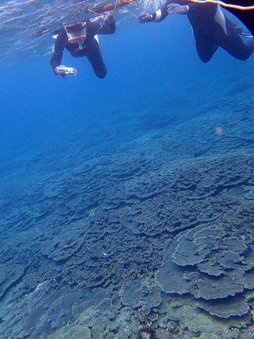 サンゴも広がる底土の海で