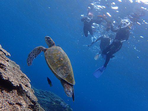 ゆっくり近づきウミガメ見たり