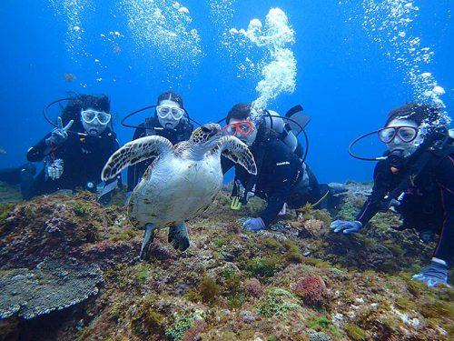 呼吸しに泳いで上がるアオウミガメ