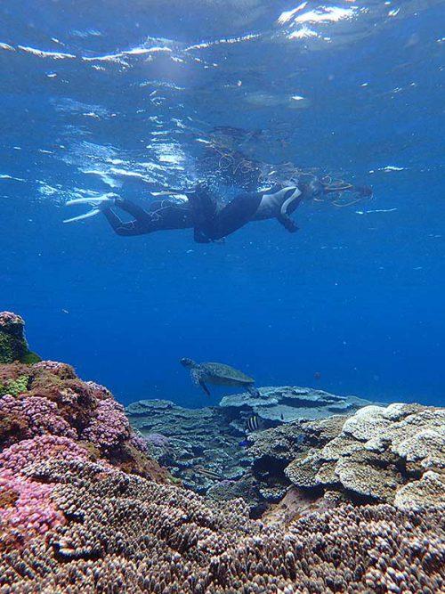 ウミガメ見つつグルッと周り