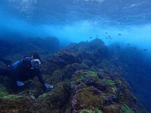 波打ち際の魚影を横目に沖へ出て