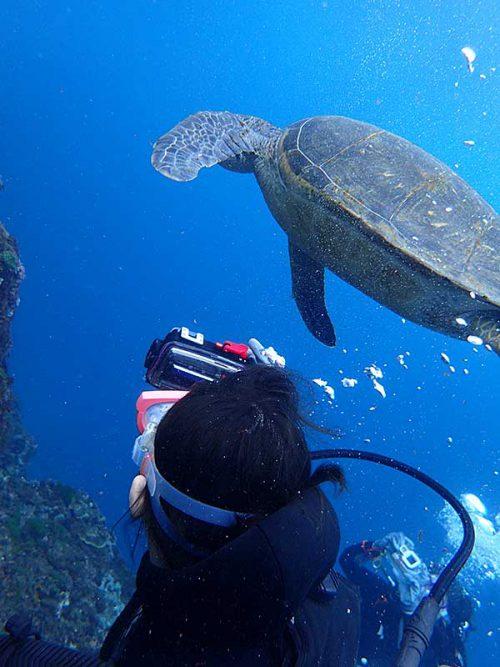近くでウミガメ撮ってみて