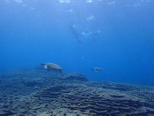 沖まで泳げばウミガメたくさんおりまして