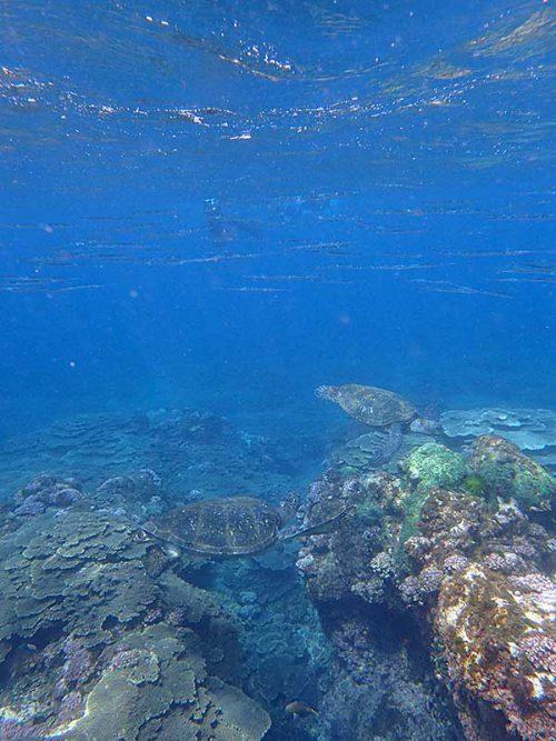 大きなウミガメ達もたくさん見かけ