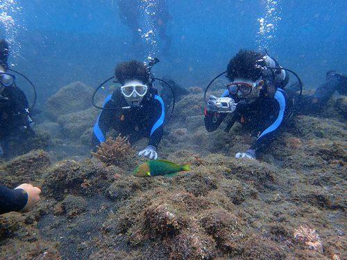 潜ればすぐに色鮮やかな魚もみられ