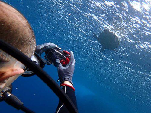 水面付近に呼吸しに行ってたアオウミガメ