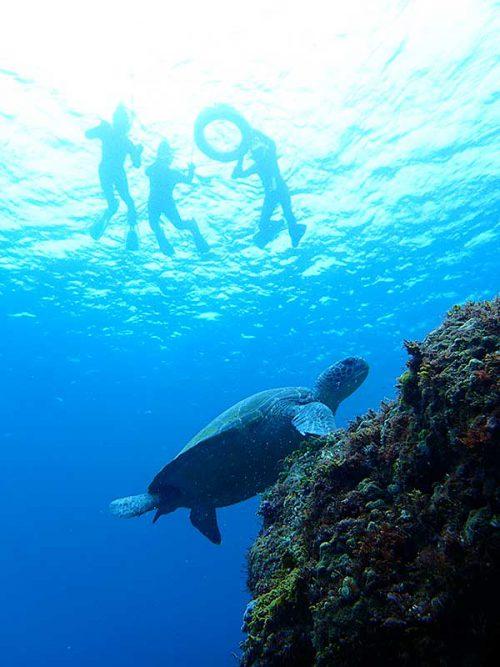 少し沖出てウミガメ見たり