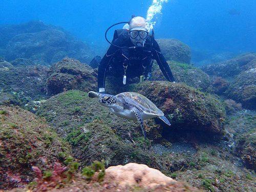 潜るとすぐにウミガメ見かけ