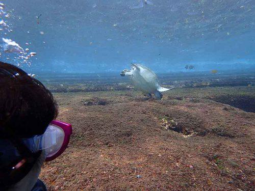 上がる間際にもウミガメ見かけ