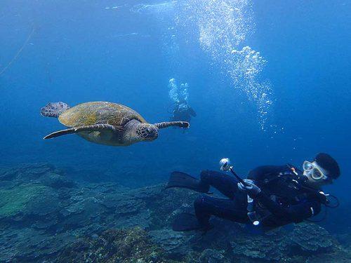 泳ぐウミガメ見ながら潜り
