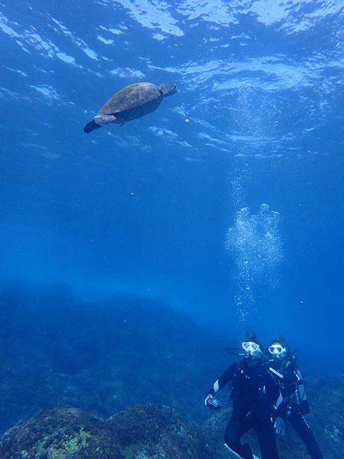 息継ぎしに上がっていってたアオウミガメ