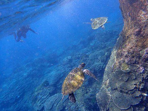テトラの近くにウミガメたくさん