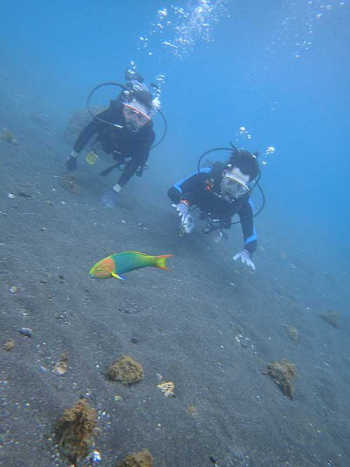 ヤマブキベラとか見ながら沖まで泳ぎ