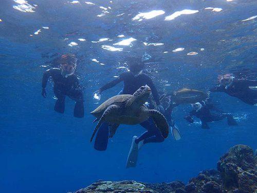 ゆっくり近くでウミガメ見たり