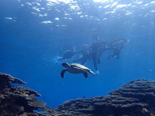 のんびりウミガメ泳いでて