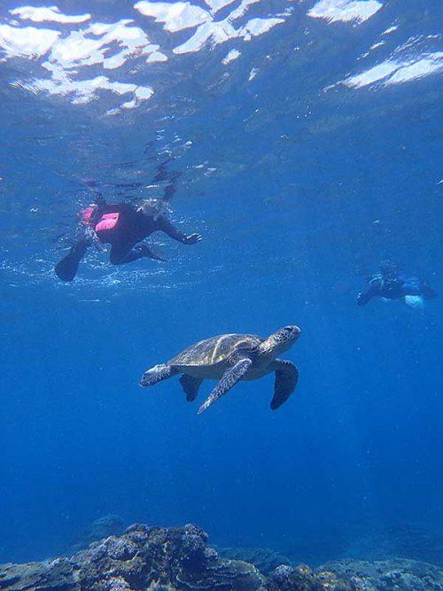 ウミガメと一緒のシュノーケリング