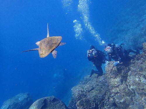 泳ぐウミガメ下から見たり