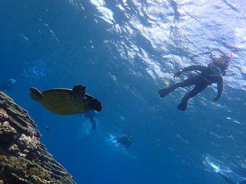 泳ぐ先にはウミガメいたり