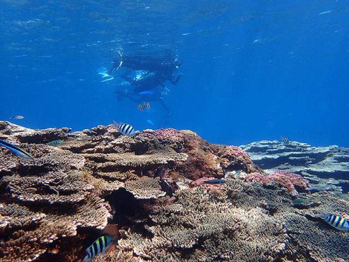 サンゴの上にも魚はたくさん