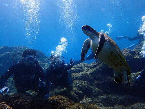 ちっこいウミガメみんなで見たり