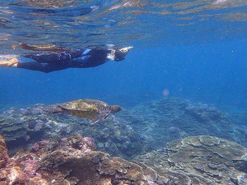 ウミガメと一緒の泳いでみたり