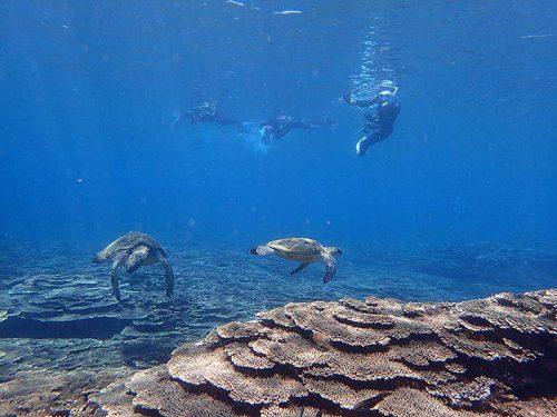 ウミガメ達を上から眺め