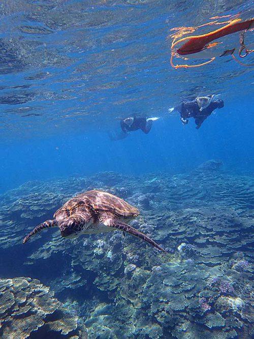 ウミガメと一緒に泳いで戻ってきたりして