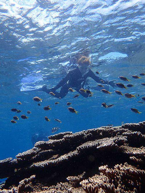 サンゴの上にはキホシスズメダイの子ども