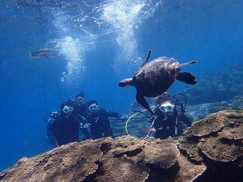 ちっこいウミガメも泳いでて