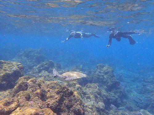 浅場でちっこいウミガメ見かけ