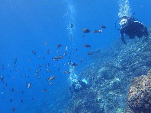 群れてる魚も見ながら泳ぎ