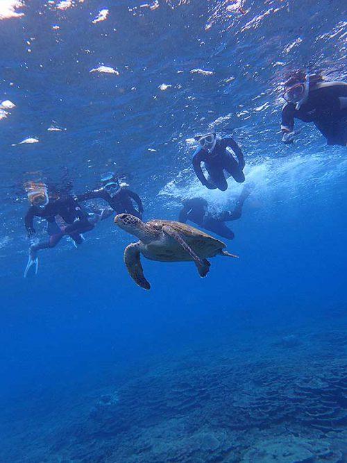みんなでウミガメ見て周り