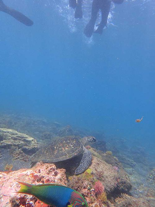 手前の浅場でウミガメ見かけ