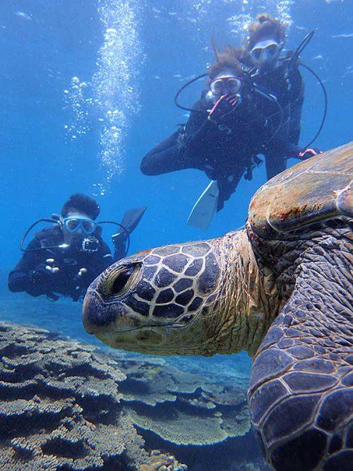 近くでウミガメ見たり撮ったりしてみたり