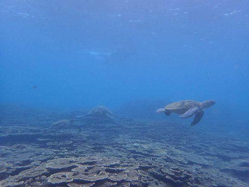 集まるウミガメ見に行って
