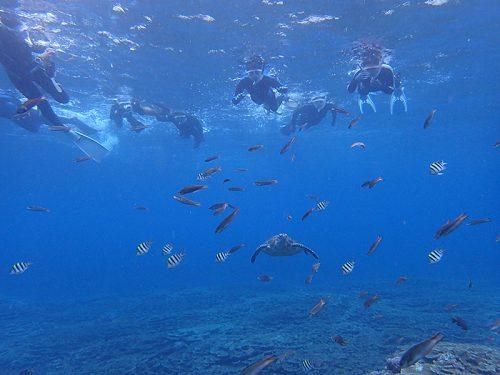 魚とウミガメ見て周り