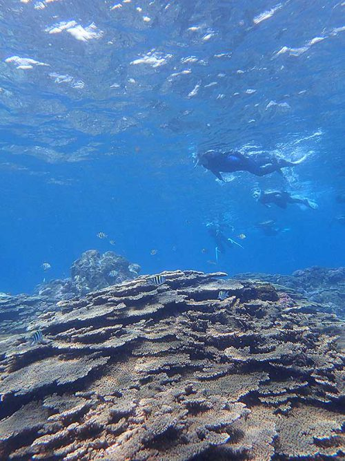 サンゴの上にはオヤビッチャ