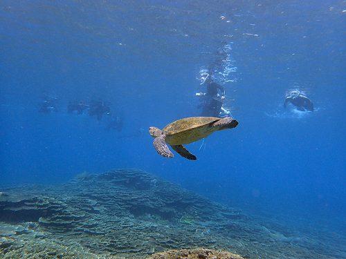 みんなを見てたアオウミガメ