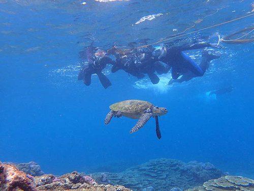 ウミガメ上からじっくり眺め